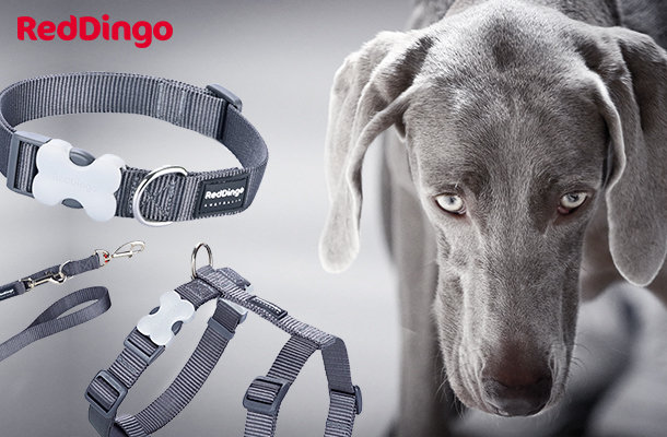 New - Red Dingo Cool Grey